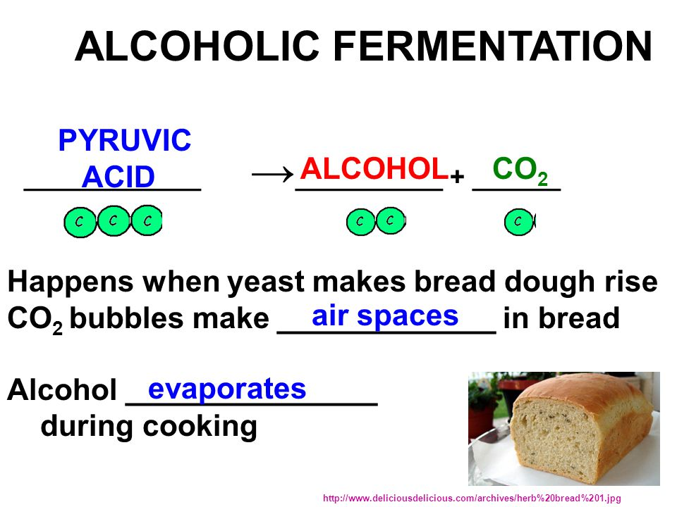 ____________ → __________ + ______ ALCOHOLIC FERMENTATION PYRUVIC ACID ALCOHOL Happens when yeast makes bread dough rise CO 2 bubbles make _____________ in bread Alcohol _______________ during cooking CO 2 http://www.deliciousdelicious.com/archives/herb%20bread%201.jpg air spaces evaporates