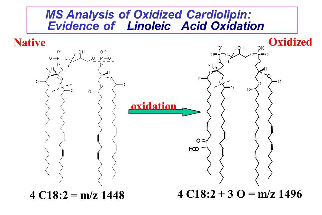 MS Analysis of Oxidized Cardiolipin: Evidence of Linoleic Acid Oxidation O O O O O POOP O O O - OH H O OK O H O O O Native 4 C18:2 = m/z 1448