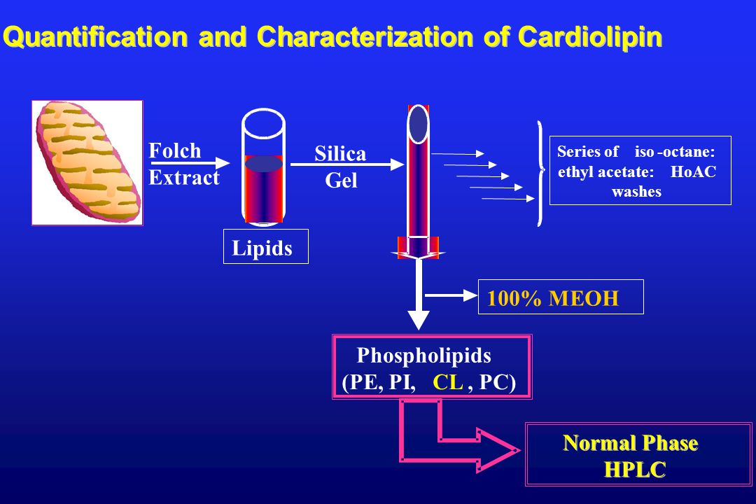 100% MEOH Series of iso-octane: ethyl acetate:HoAC washes Folch Extract Lipids Silica Gel Phospholipids (PE, PI,CL, PC) Quantification and Characterization of Cardiolipin Normal Phase HPLC