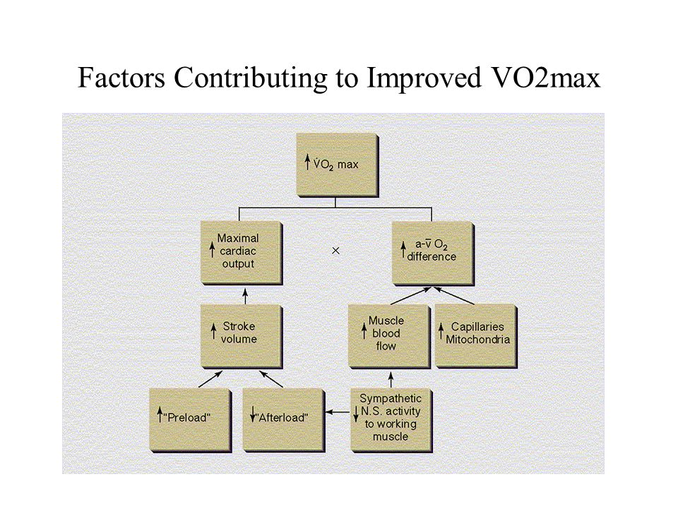 Factors Contributing to Improved VO2max