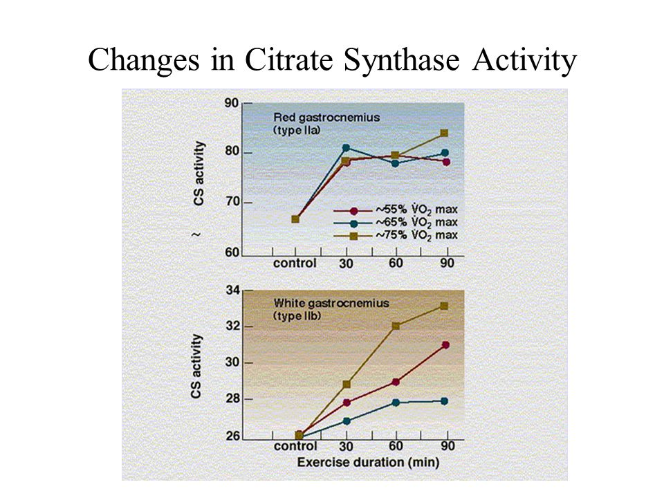 Changes in Citrate Synthase Activity