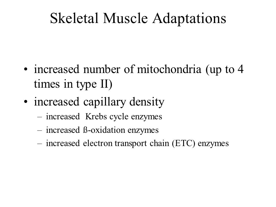Skeletal Muscle Adaptations increased number of mitochondria (up to 4 times in type II) increased capillary density –increased Krebs cycle enzymes –increased ß-oxidation enzymes –increased electron transport chain (ETC) enzymes