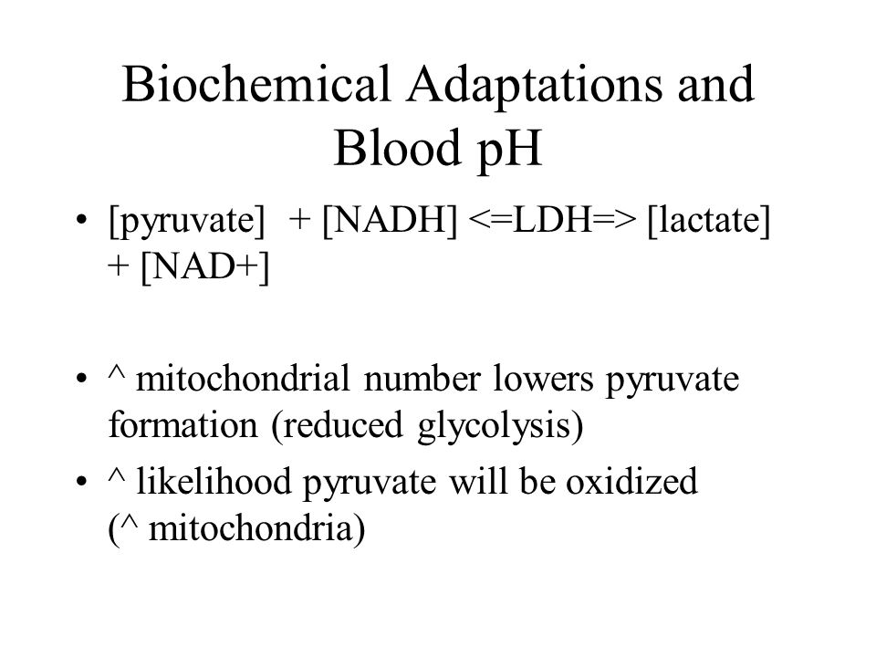 Biochemical Adaptations and Blood pH [pyruvate] + [NADH] [lactate] + [NAD+] ^ mitochondrial number lowers pyruvate formation (reduced glycolysis) ^ likelihood pyruvate will be oxidized (^ mitochondria)