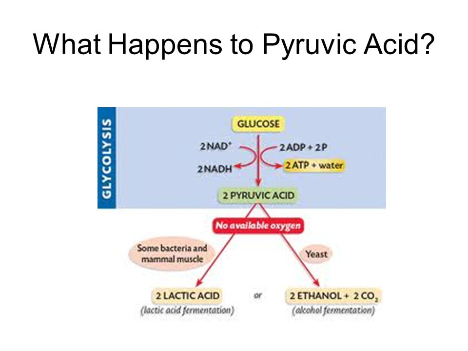 What Happens to Pyruvic Acid?