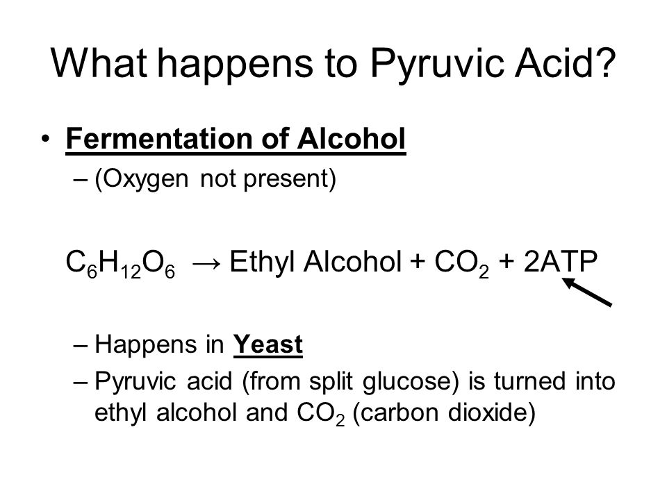What happens to Pyruvic Acid? Fermentation of Alcohol –(Oxygen not present) C 6 H 12 O 6 → Ethyl Alcohol + CO 2 + 2ATP –Happens in Yeast –Pyruvic acid