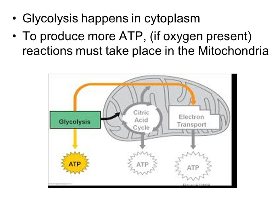 Glycolysis happens in cytoplasm To produce more ATP, (if oxygen present) reactions must take place in the Mitochondria