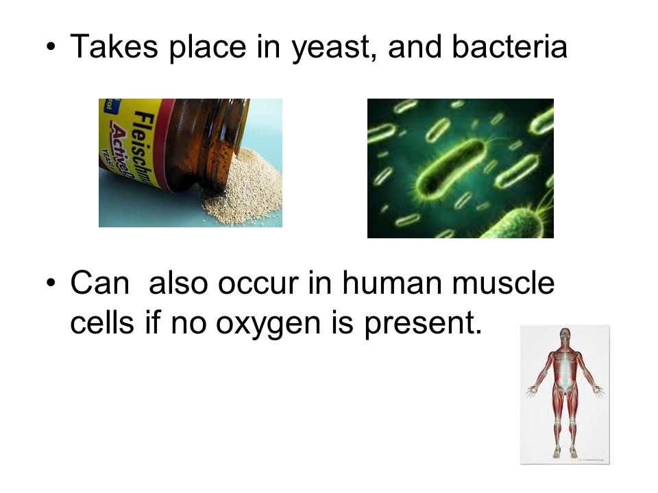 Takes place in yeast, and bacteria Can also occur in human muscle cells if no oxygen is present.