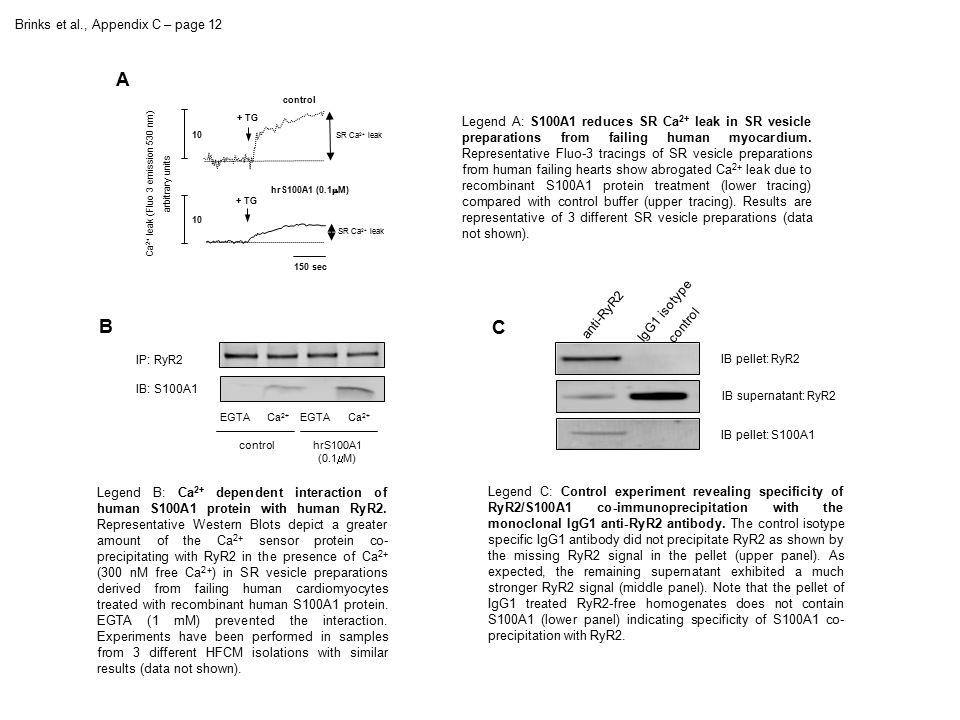 Brinks et al., Appendix C – page 12 IP: RyR2 IB: S100A1 EGTACa 2+ EGTACa 2+ controlhrS100A1 (0.1  M) + TG 150 sec 10 control hrS100A1 (0.1  M) Ca 2+ leak (Fluo 3 emission 530 nm) arbitrary units 10 SR Ca 2+ leak A B Legend B: Ca 2+ dependent interaction of human S100A1 protein with human RyR2.