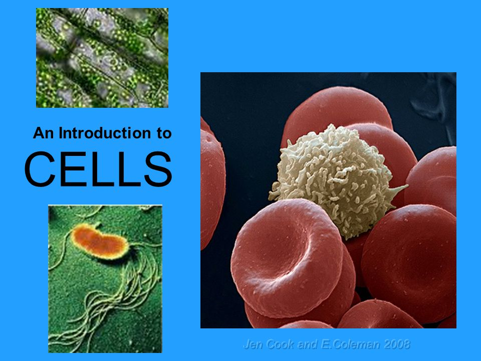 CELLS An Introduction to