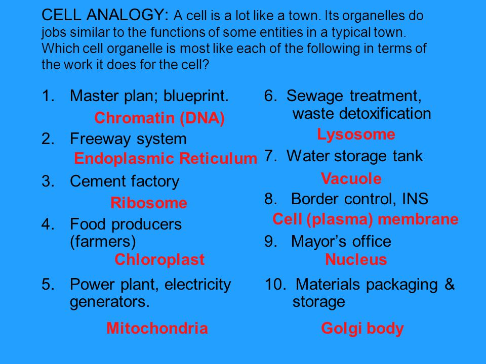 CELL ANALOGY: A cell is a lot like a town. Its organelles do jobs similar to the functions of some entities in a typical town. Which cell organelle is