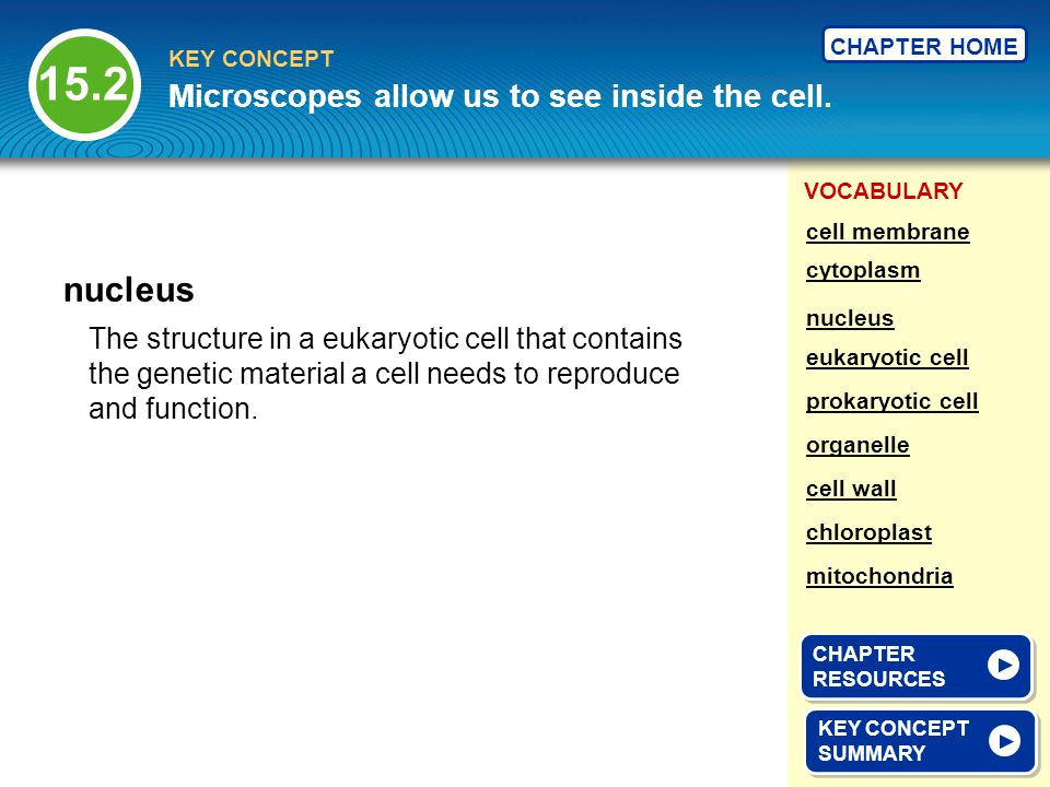 VOCABULARY KEY CONCEPT CHAPTER HOME The structure in a eukaryotic cell that contains the genetic material a cell needs to reproduce and function. nucl