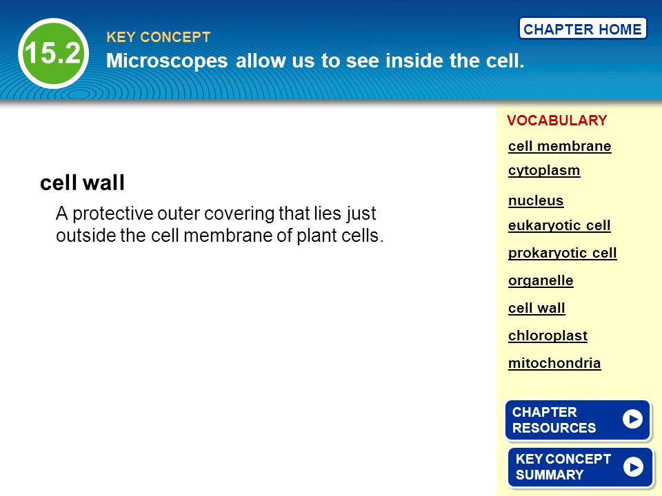VOCABULARY KEY CONCEPT CHAPTER HOME A protective outer covering that lies just outside the cell membrane of plant cells. cell wall KEY CONCEPT SUMMARY