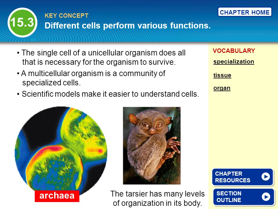 VOCABULARY KEY CONCEPT CHAPTER HOME archaea Different cells perform various functions.