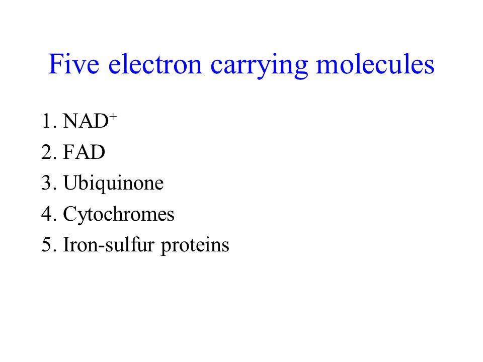 1. NAD + 2. FAD 3. Ubiquinone 4. Cytochromes 5.