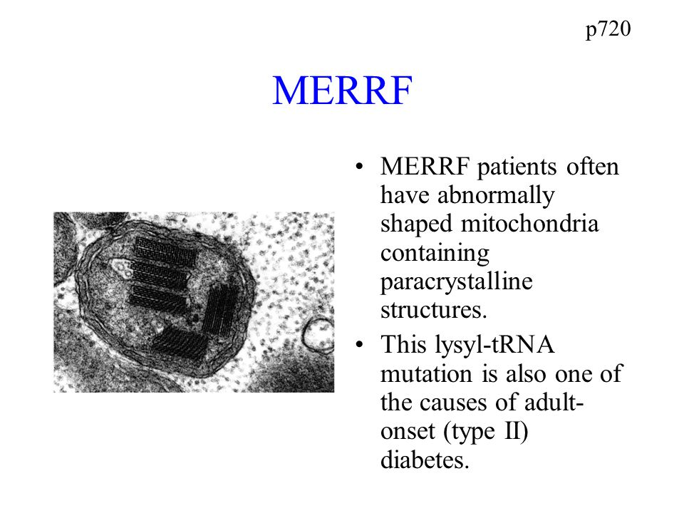 p720 MERRF MERRF patients often have abnormally shaped mitochondria containing paracrystalline structures.