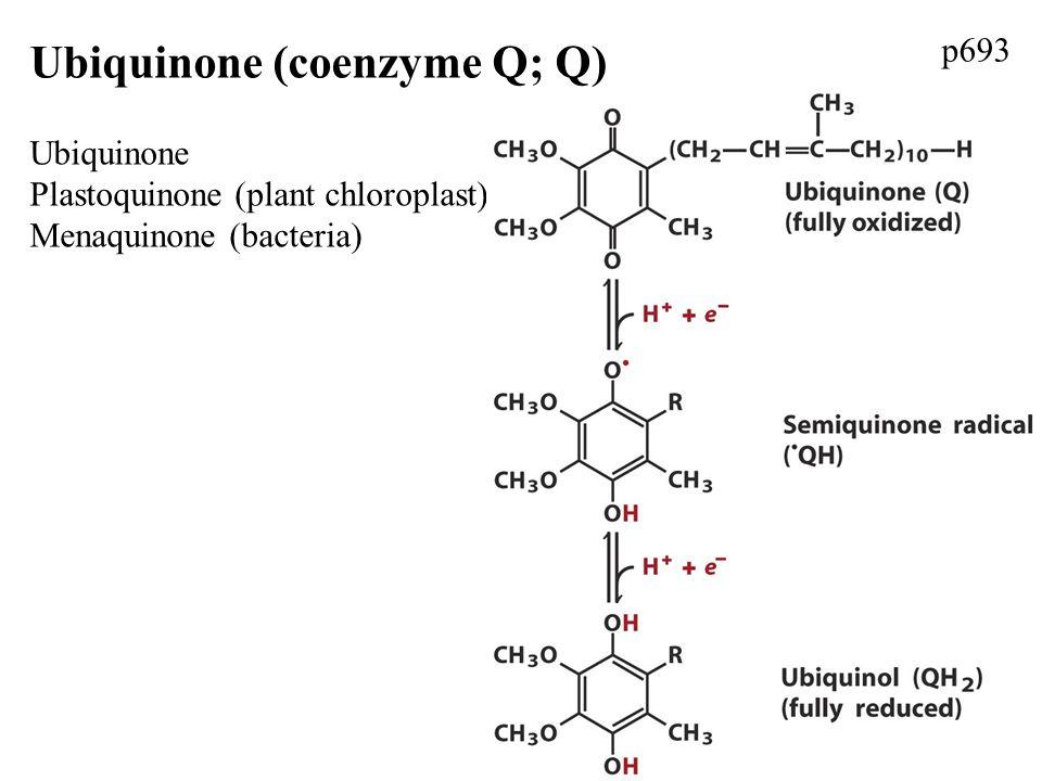 Ubiquinone (coenzyme Q; Q) Ubiquinone Plastoquinone (plant chloroplast) Menaquinone (bacteria) p693