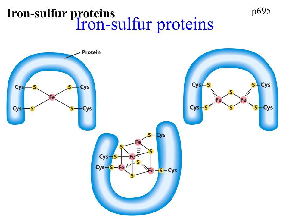 Iron-sulfur proteins p695 Iron-sulfur proteins