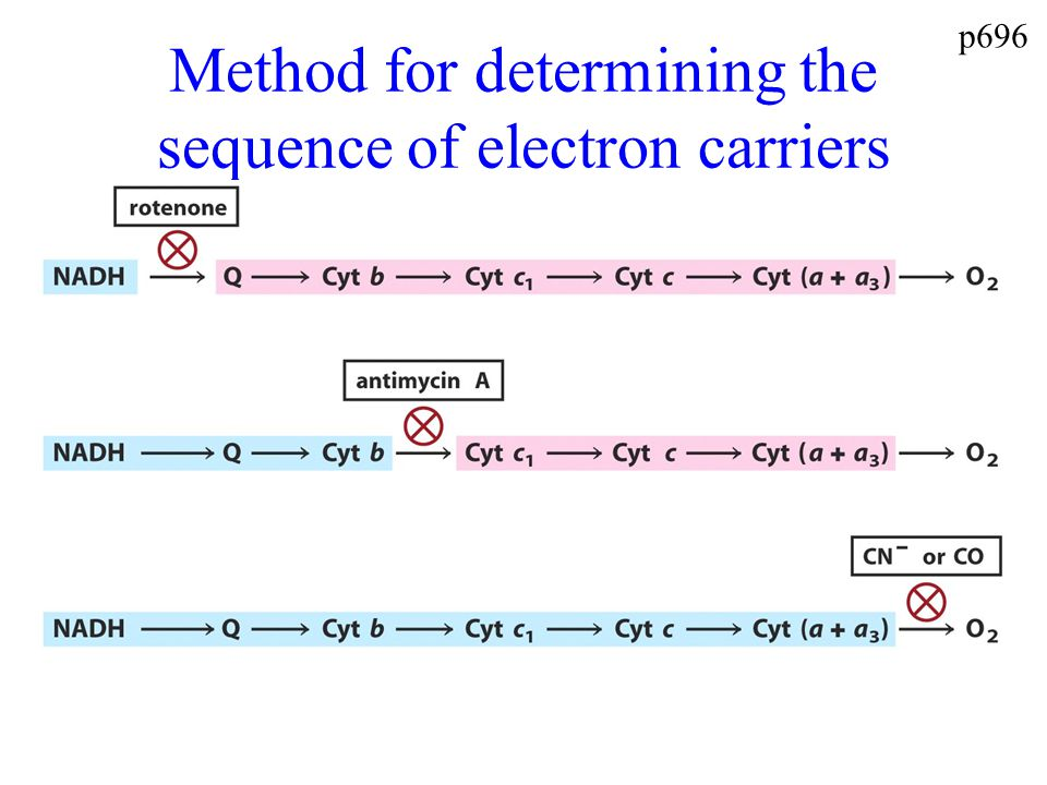 Method for determining the sequence of electron carriers p696
