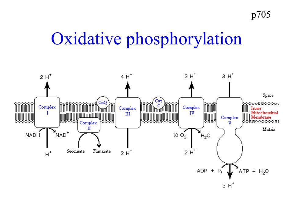 p705 Oxidative phosphorylation