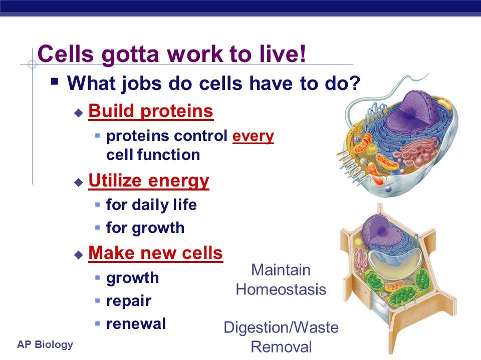 AP Biology Fetal development 15 weeks 6 weeks syndactyly