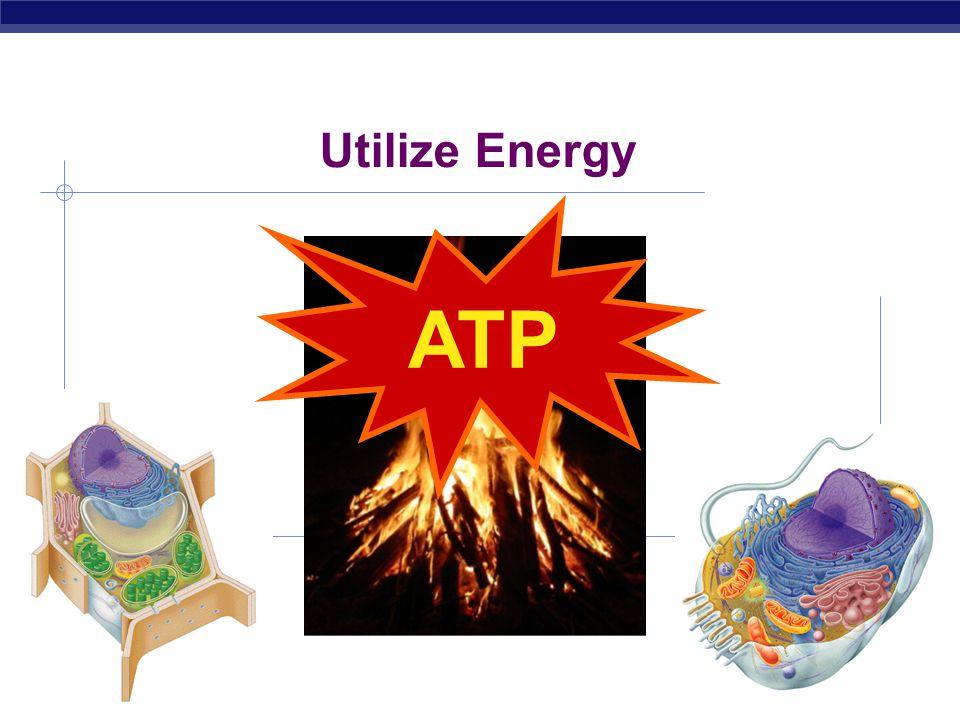 AP Biology 2007-2008 Utilize Energy ATP