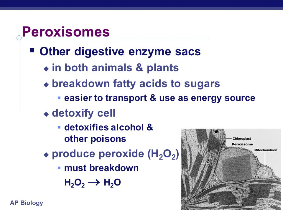 AP Biology Vacuoles in plants  Functions  storage  stockpiling proteins or inorganic ions  depositing metabolic byproducts  storing pigments  storing defensive compounds against herbivores  selective membrane  control what comes in or goes out  Larger vacuole allows for large surface area to volume ratio