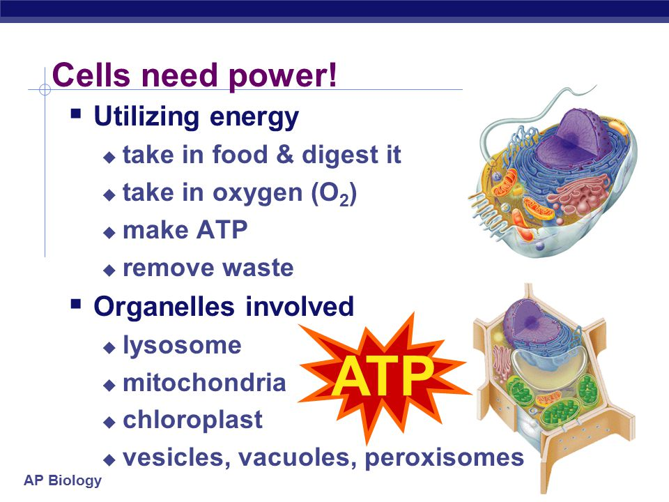 AP Biology 2007-2008 Utilize Energy ATP