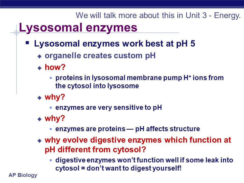 AP Biology Lysosomal enzymes  Lysosomal enzymes work best at pH 5  organelle creates custom pH  how.