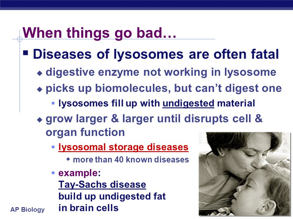 AP Biology Mitochondria  Almost all eukaryotic cells have mitochondria  there may be 1 very large mitochondrion or 100s to 1000s of individual mitochondria  number of mitochondria is correlated with aerobic metabolic activity  more activity = more energy needed = more mitochondria What cells would have a lot of mitochondria.