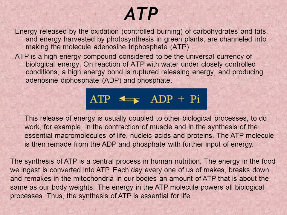ATP Energy released by the oxidation (controlled burning) of carbohydrates and fats, and energy harvested by photosynthesis in green plants, are channeled into making the molecule adenosine triphosphate (ATP).