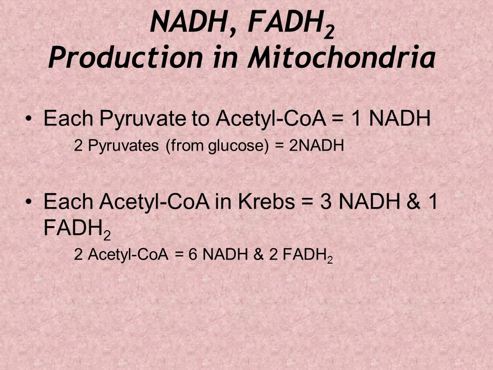 NADH, FADH 2 Production in Mitochondria Each Pyruvate to Acetyl-CoA = 1 NADH 2 Pyruvates (from glucose) = 2NADH Each Acetyl-CoA in Krebs = 3 NADH & 1 FADH 2 2 Acetyl-CoA = 6 NADH & 2 FADH 2