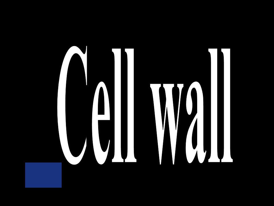 Nuclear membrane Ribosomes Mitochondria Cell wall Cytoplasm