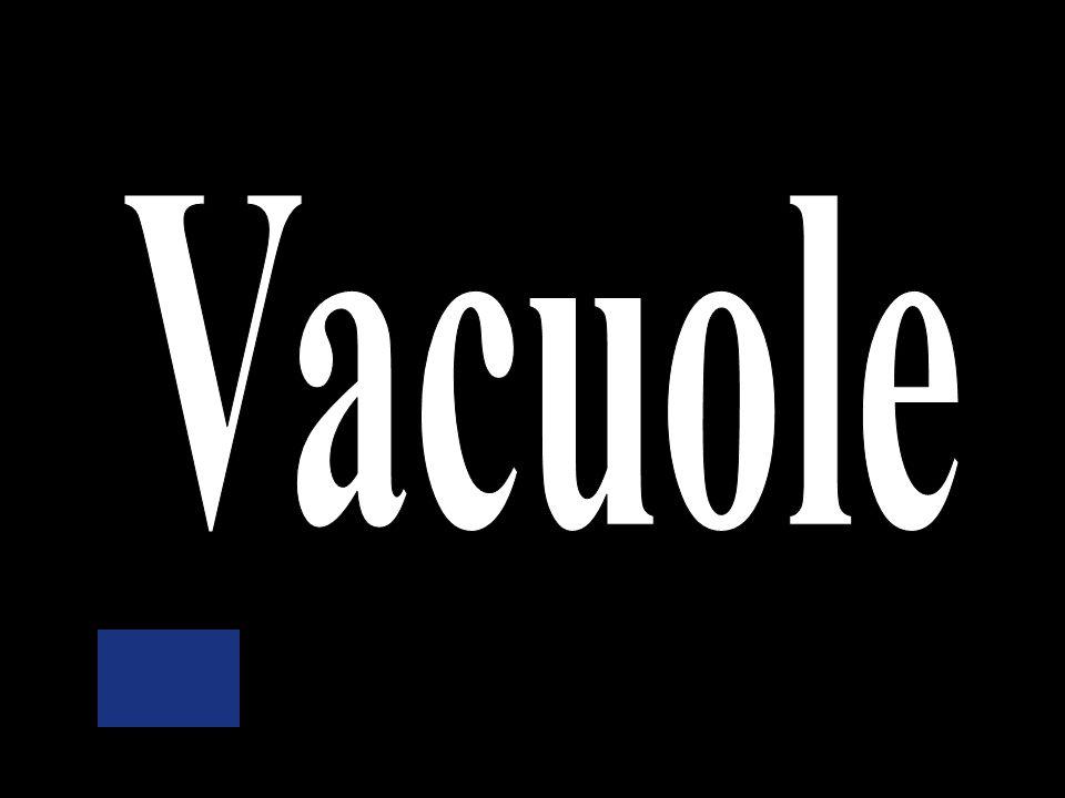 Nuclear membrane Ribosomes Vacuole Mitochondria Cytoplasm