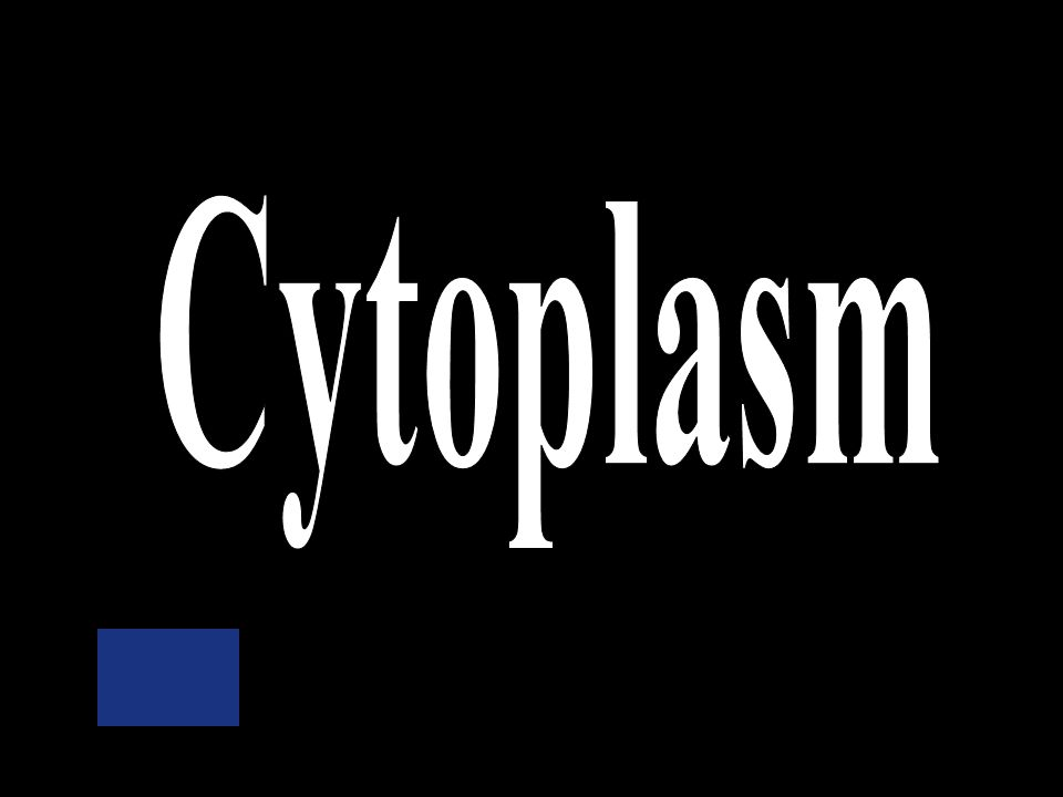 Nuclear membrane Ribosomes Mitochondria Cytoplasm