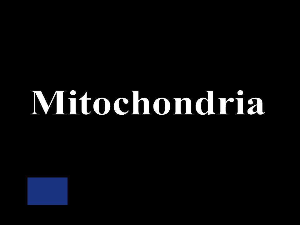 Cell membrane Ribosomes Mitochondria Cytoplasm