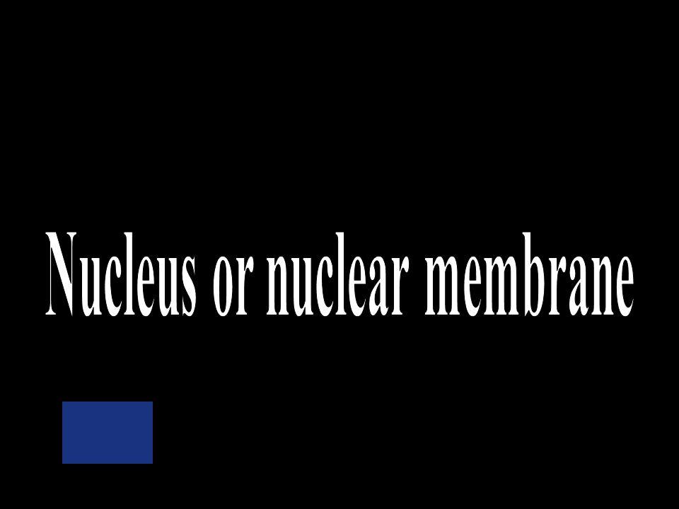 Cell membrane Nuclear membrane Ribosomes Mitochondria Cytoplasm