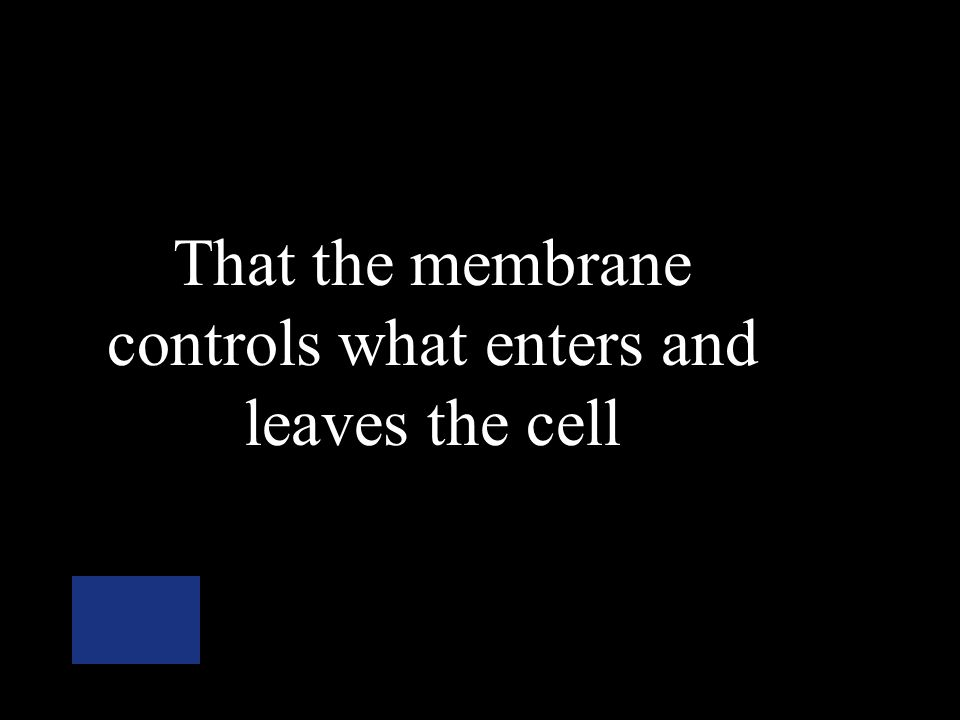 What does it mean if the plasma membrane is selectively permeable?