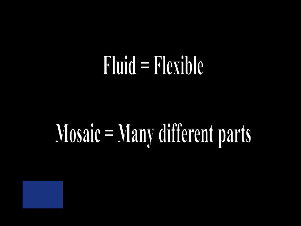 When describing the cell membrane what do the terms fluid & mosaic mean