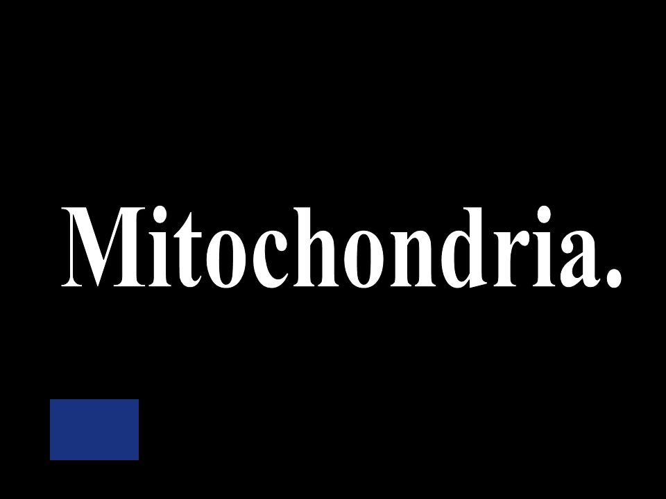 Where does the process of cellular respiration occur Ribosomes Cytoplasm Mitochondria Nucleus