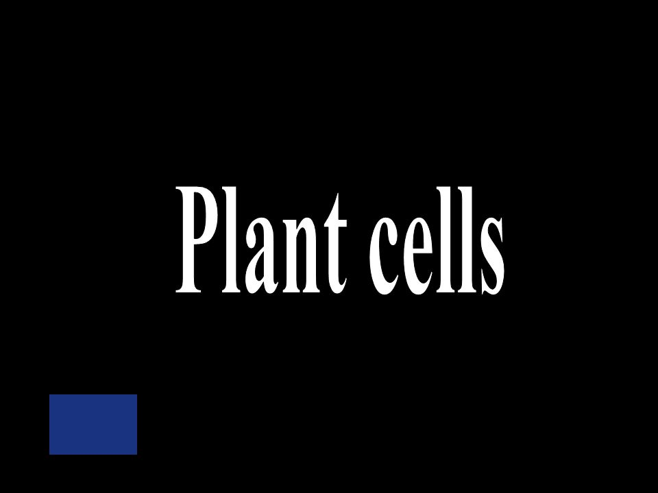 A cell wall is only found in _____cells. Plant Bacteria Animal