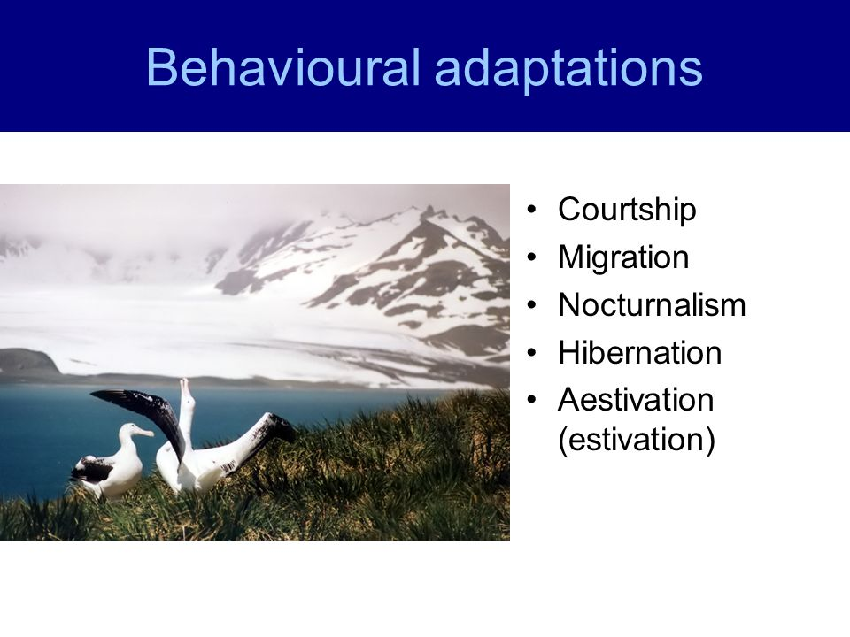 Behavioural adaptations Courtship Migration Nocturnalism Hibernation Aestivation (estivation)