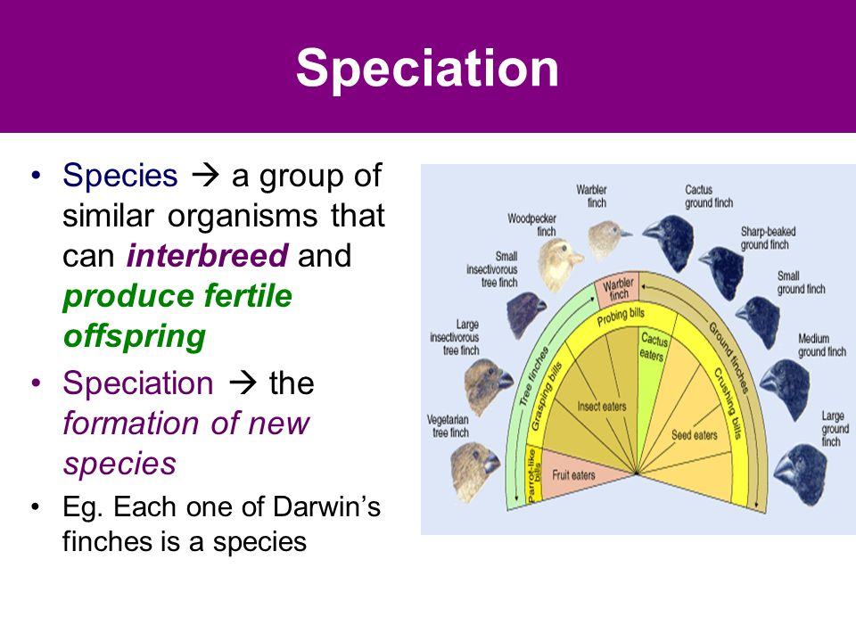 Speciation Species  a group of similar organisms that can interbreed and produce fertile offspring Speciation  the formation of new species Eg.