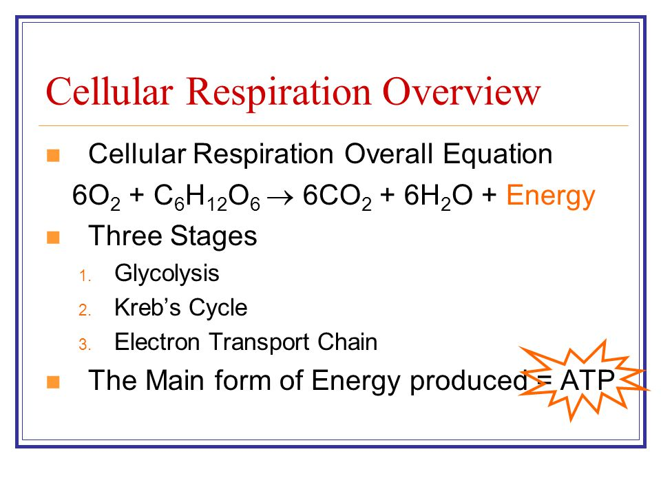 Cellular Respiration Overview Cellular Respiration Overall Equation 6O 2 + C 6 H 12 O 6  6CO 2 + 6H 2 O + Energy Three Stages 1. Glycolysis 2. Kreb's