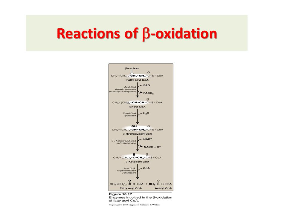 Reactions of  -oxidation