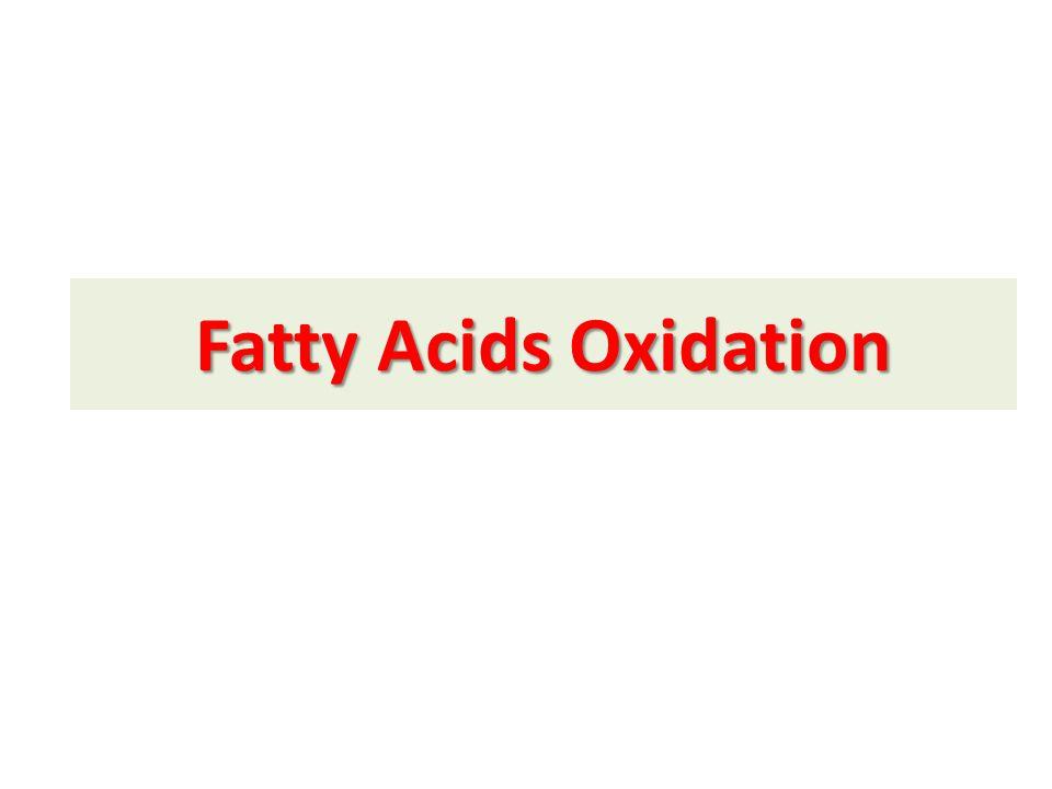 Excessive Production of Ketone Bodies in Diabetes Mellitus