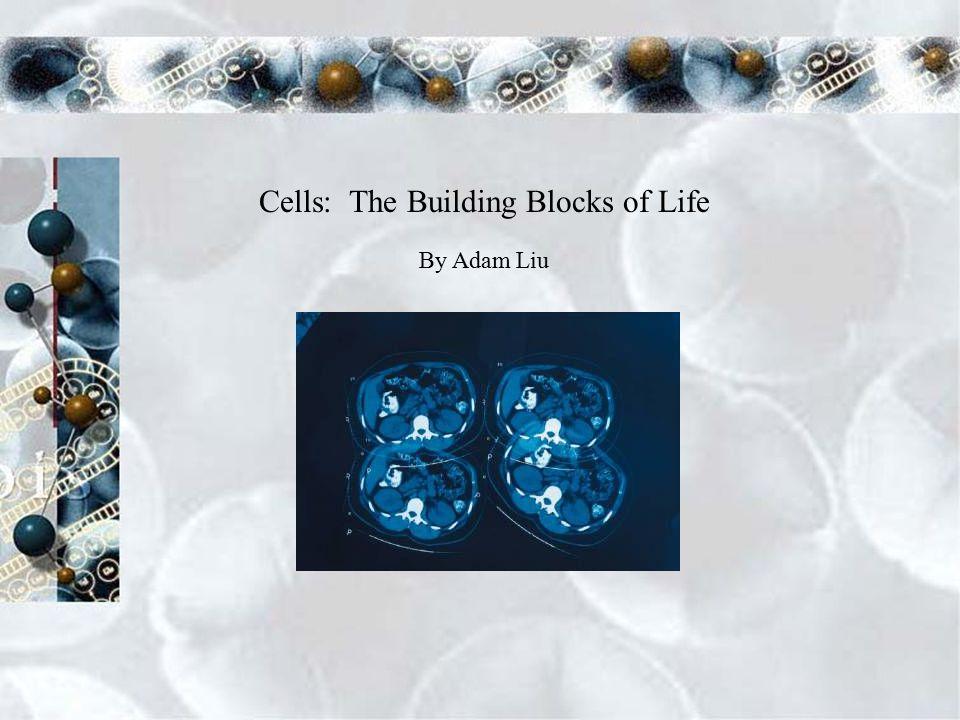Cells: The Building Blocks of Life By Adam Liu