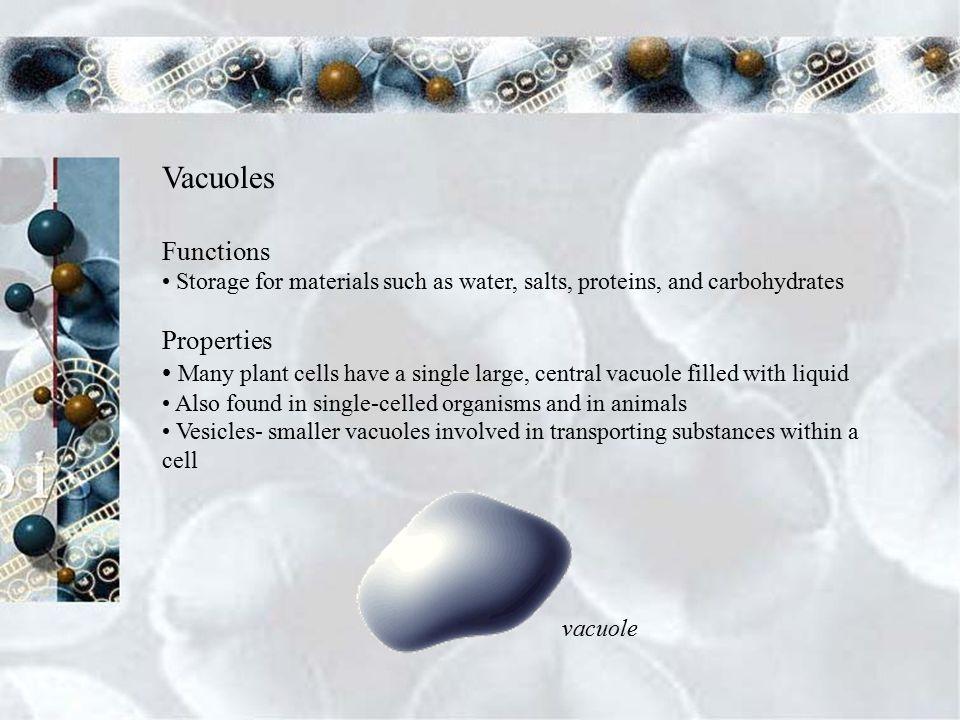 Lysosomes