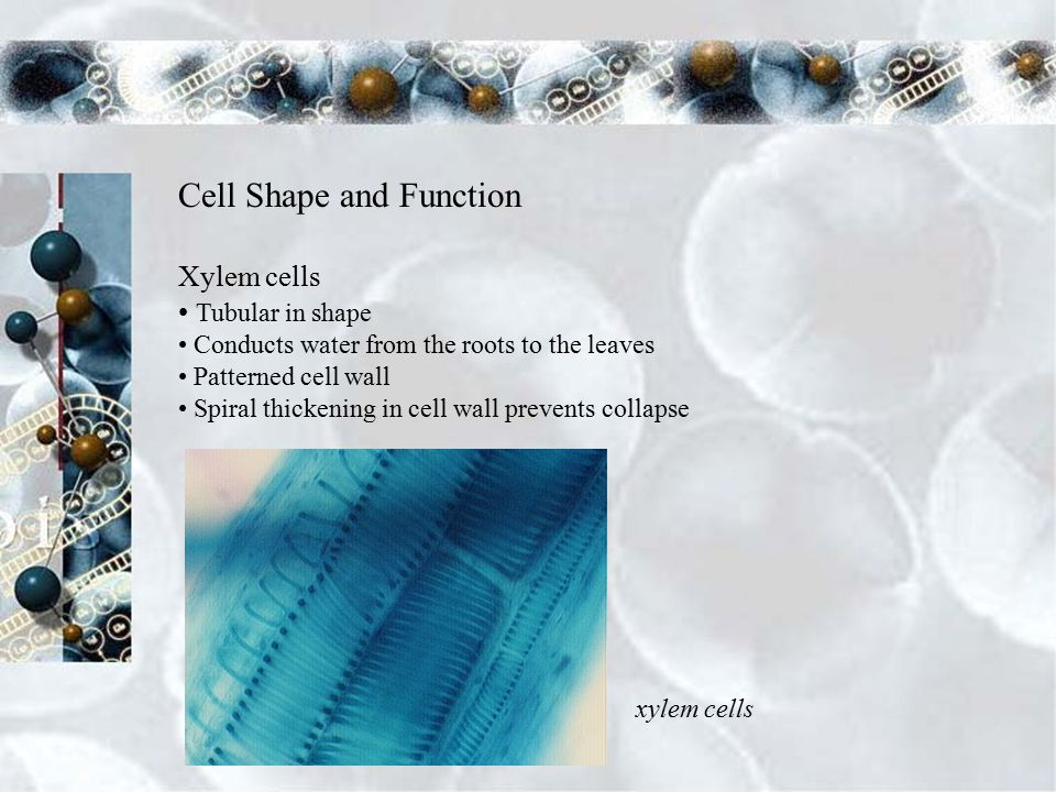 Review Directions For each number select the correct corresponding structure of an animal cell.