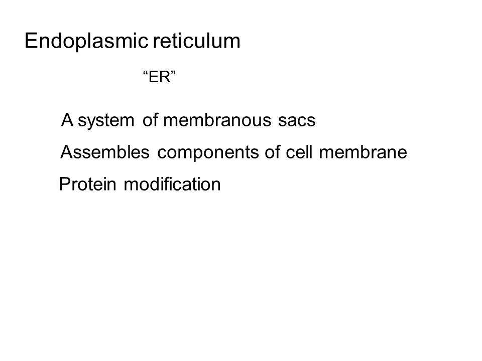 """Endoplasmic reticulum """"ER"""" Assembles components of cell membrane Protein modification A system of membranous sacs"""