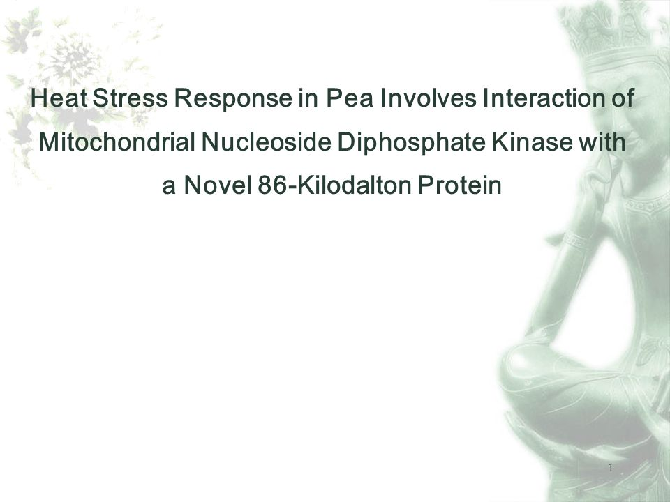 1 Heat Stress Response in Pea Involves Interaction of Mitochondrial Nucleoside Diphosphate Kinase with a Novel 86-Kilodalton Protein